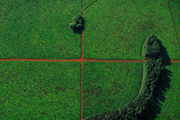 5-Tea-plantations-in-the-province-of-Corrientes-Argentina