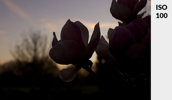 Photo of a pink flower in low light - demonstrating ideal exposure and ISO
